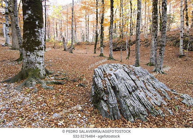 Forest in Ordesa National Park, Pyrenees, Huesca Province, Aragon, Spain