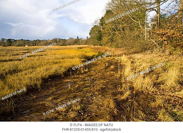 Boundary between saltmarsh and broad-leafed woodland, Upton, Poole, Dorset, England, december