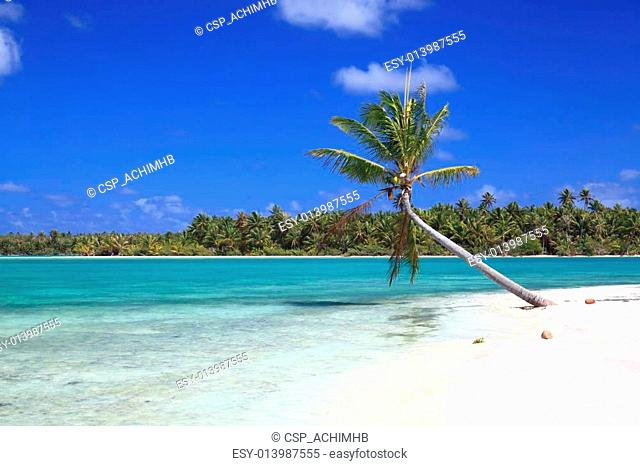 Lonely Coconut Tree on Dreamlike Island in the South Pacific Surrounded by Turquoise Water
