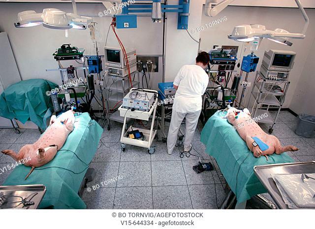Doctors testing instruments. Laboratory, animal experimental. Copenhagen. Denmark
