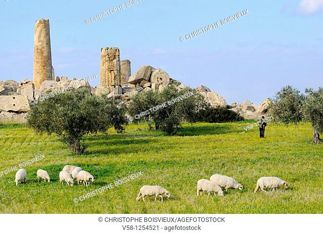Italy, Sicily, Selinunte, Shepherd and sheep near the ruins of temple G