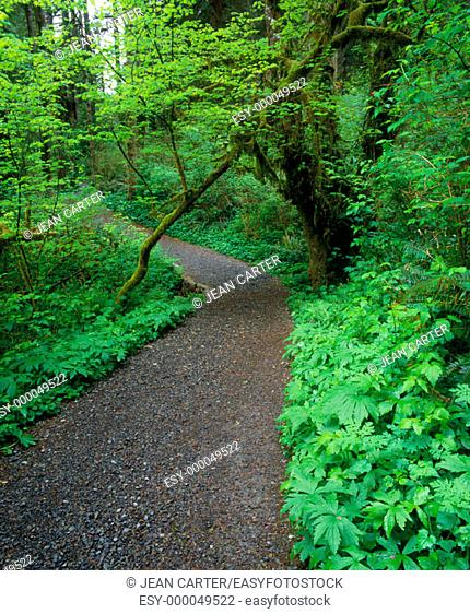 Path to Upper North Falls, Silver Falls State Park. Northern Oregon, USA