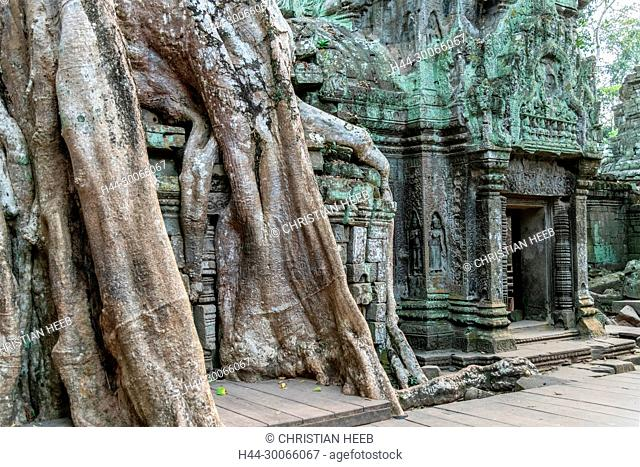 Asia, Southeast Asia, asian, Cambodia, cambodian, Siem Reap, UNESCO, World Heritage, Angkor, Ta Prohm