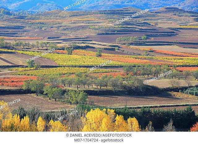 Rioja wine region landscape, Najerilla valley, La Rioja, Spain