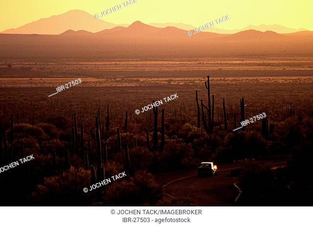 USA, United States of America, Arizona: Saguaro National Park, near Tucson, dirtroad at sunset