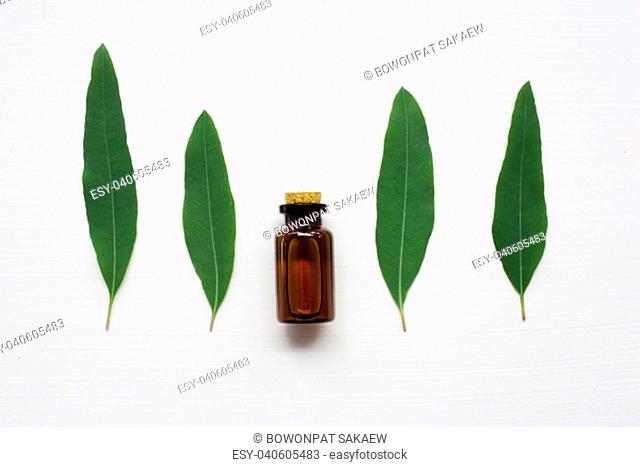 Eucalyptus oil bottle with leaves on white background