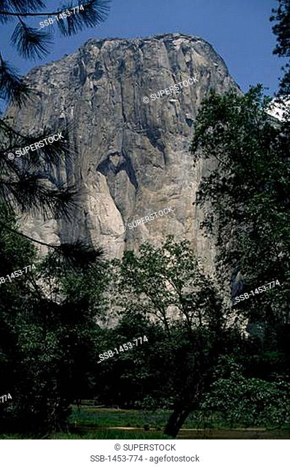 Trees in front of a mountain, El Capitan, Yosemite National Park, California, USA