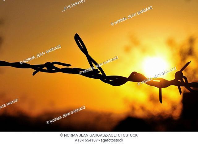 Barbed wire at sunset in Sahuarita, Arizona, USA