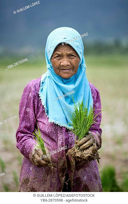Portrait of a female rice field worker at the Harau Valley, Sumatra, Indonesia