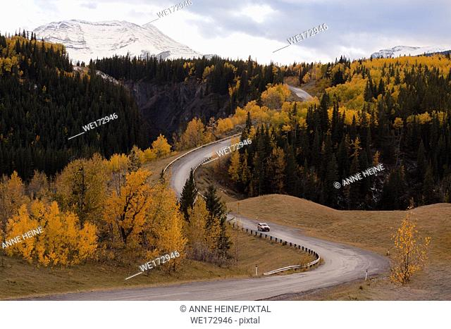 Road winding along the Sheep River Canyon. Hwy 546. Landscape with fir and aspen in fall. Sheep Valley National Park, Alberta, Canada