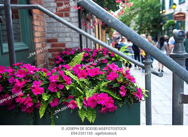 Container gardening on a street in Quebec City, Canada