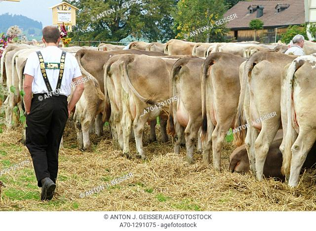 Appenzell, switzerland, cattle market