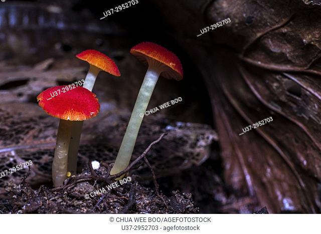 Mushrooms found at Matang Family Park, Sarawak, Malaysia