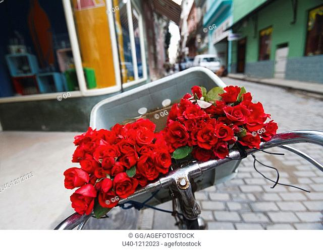 Cuba, Havana Vieja, flowers in bicycle basket