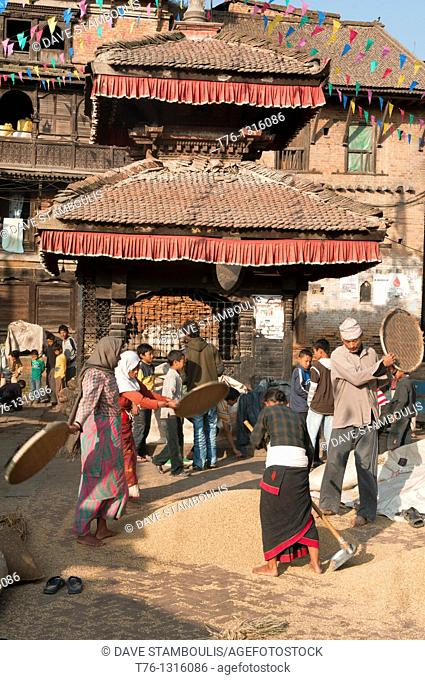 sifting rice grains during the autumn harvest in the old city of Bhaktapur near Kathmandu, Nepal