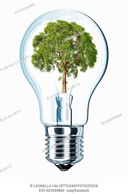 Light bulb with tree in place of filament. On white background