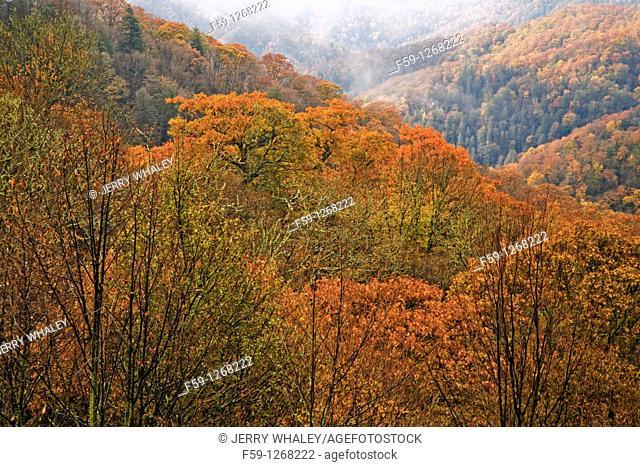 Autumn, Great Smoky Mountains NP, TN-NC