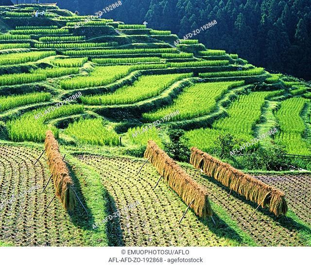 Maruyama Senmaida Rice field, Mie Prefecture