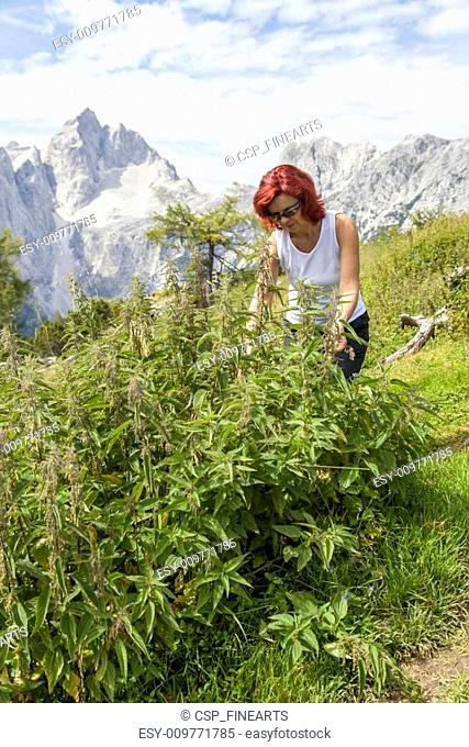 Cute woman picking stinging nettle
