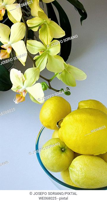 Lemons and orchids