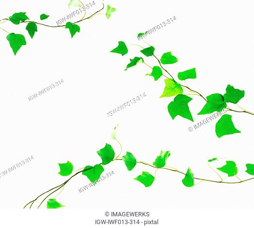 View of leaves against white background digital composite
