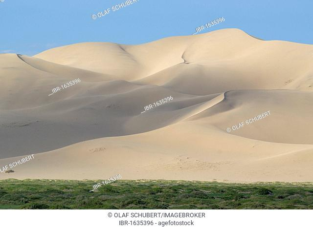 Lush green grass landscape in front of the large Khorgoryn Els sand dunes in the Gobi Desert, Khorgoryn Els, Gurvan Saikhan National Park, Oemnoegov Aimak