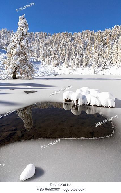Partially frozen alpine lake, surrounded by snowy fir Trees, Orobie Alps, Lombardy, Italy
