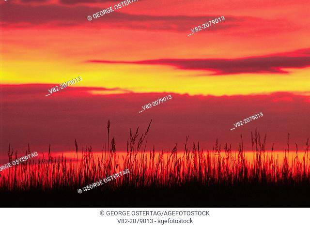 Grass sunrise, Tallgrass Prairie National Preserve, Flint Hills Scenic Byway, Kansas