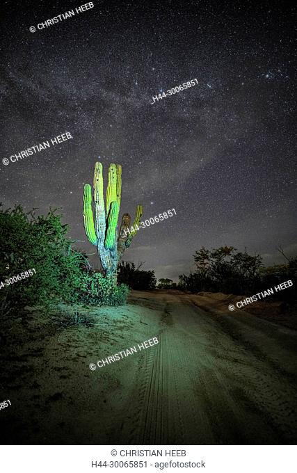 Central America, Mexico, Baja California, Sea of Cortez, Cardon and rural road