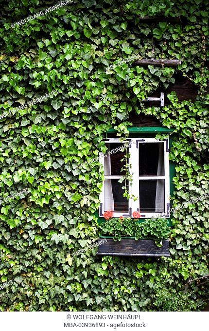 Residence, facade, climbing-plant, ivy, detail, windows, flowers, house, house-facade, overgrown, overgrown, green, leaves, farmhouse, rural, idyll, geraniums
