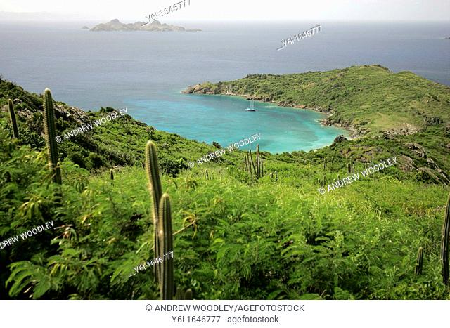 Cruising yacht anchored off Grand Colombier beach St Barts island cactus in foreground