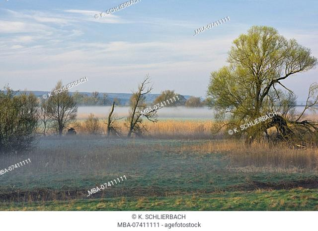 Germany, Brandenburg, Uckermark, Criewen, Lower Oder Valley National Park, morning mood with fog in the riparian forests near Criewen