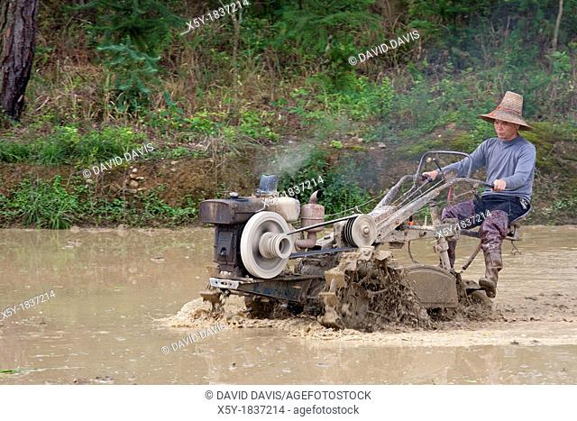 Chinese farmer working with a motorized plow in a rice field in southeast China
