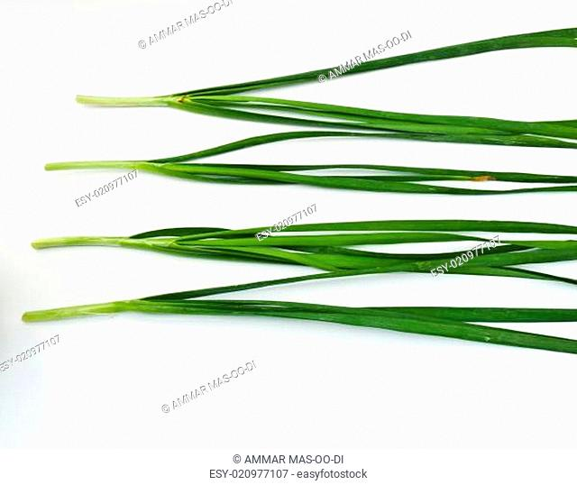 Garlic chives isolated on white background