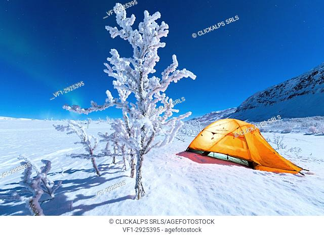Isolated tent and frozen tree in the polar night, Abisko, Kiruna Municipality, Norrbotten County, Lapland, Sweden