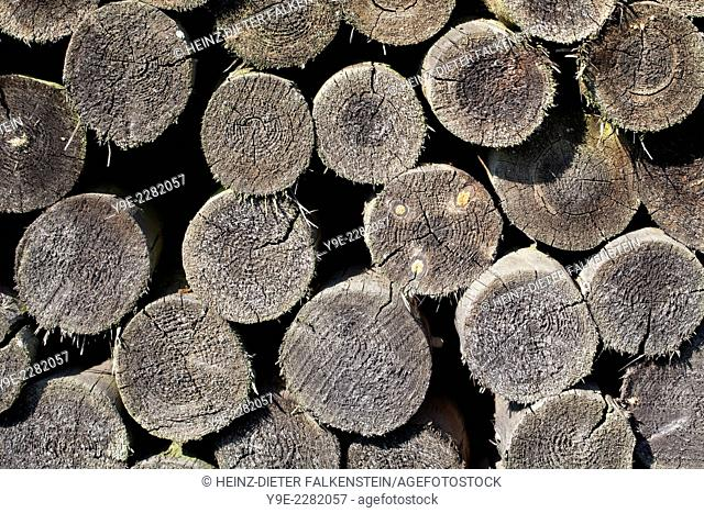 Old woodpile