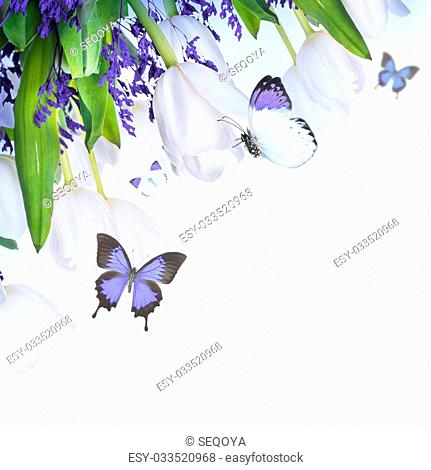 White tulips with blue grass and butterfly. Floral background
