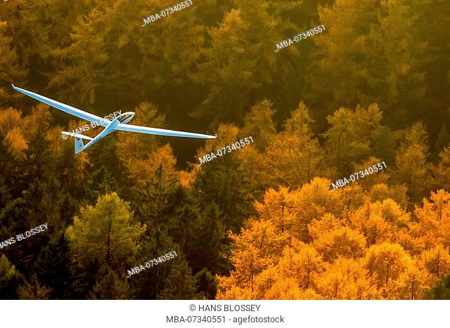 Duo Discus D-5443 from the LSC Oeventrop eV over the autumn woods of Oeventrop, glider double seater from Schempp-Hirth, Arnsberg, Ruhr area