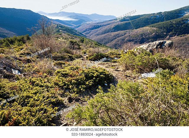 Sierra Norte from Loma Mediana  El Cardoso de la Sierra  Guadalajara  Castilla la Mancha  Spain