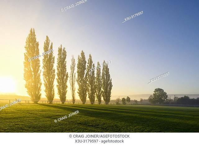 Autumn sunrise behind a row of Lombardy Poplar trees at the recreation ground in the North Somerset village of Wrington. These trees are a memorial to the 8...
