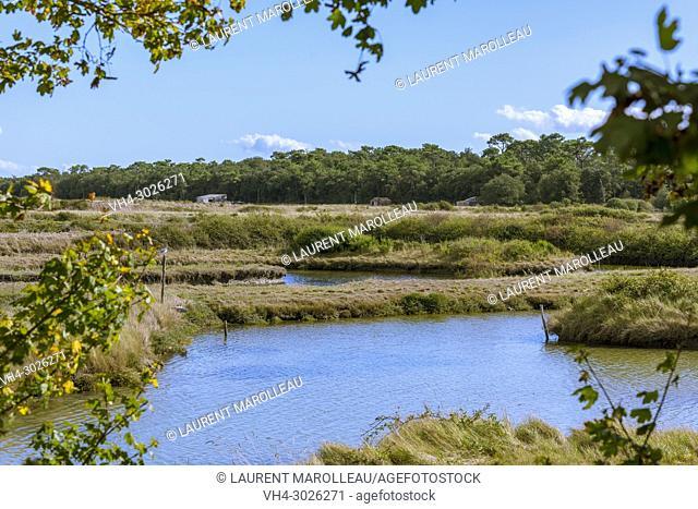 On the Bikeway Bourgenay-La Guittière through Payré Estuary and the Salt Marsh. Talmont-Saint-Hilaire, Sables-d'Olonne District, Vendée Department