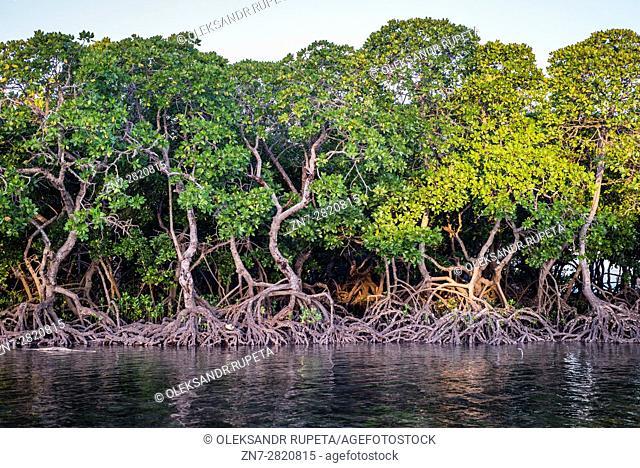 Mangroves on Tumbatu island near Zanzibar, Tanzania