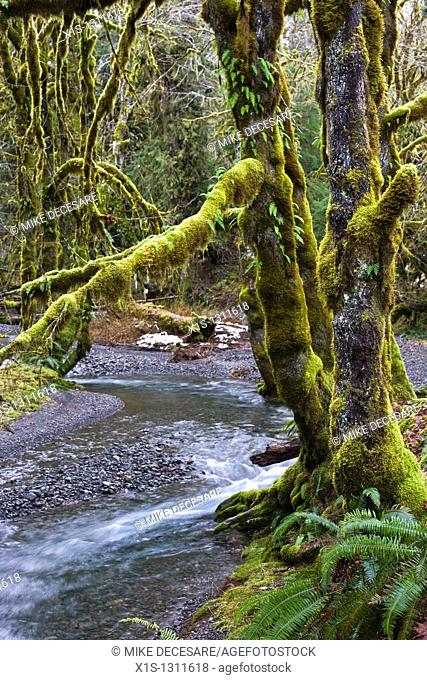 River winds through rainforest and moss covered trees