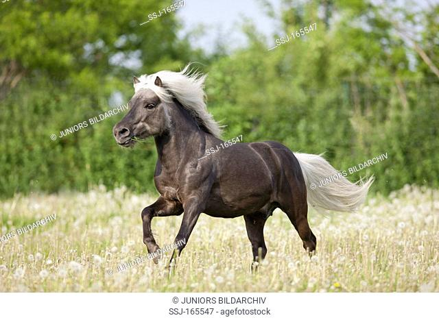 Classic Pony horse on meadow