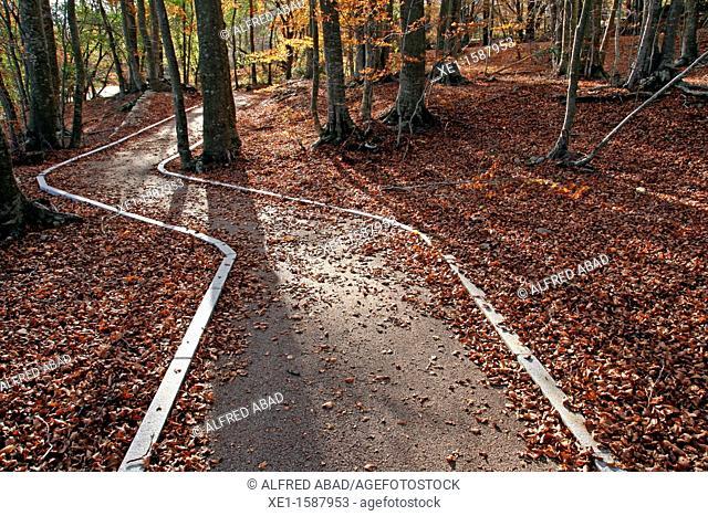 way, beech, autumn, Montseny Natural Park, Catalonia, Spain