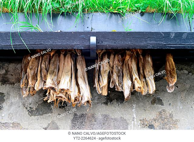 Fish dries in village of Tjørnuvík, Streymoy, Faroe Islands