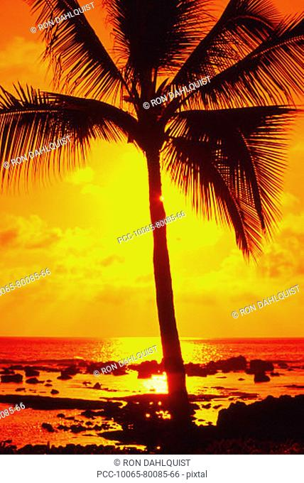 Palm tree silhouetted by a yellow sunset sky and ocean