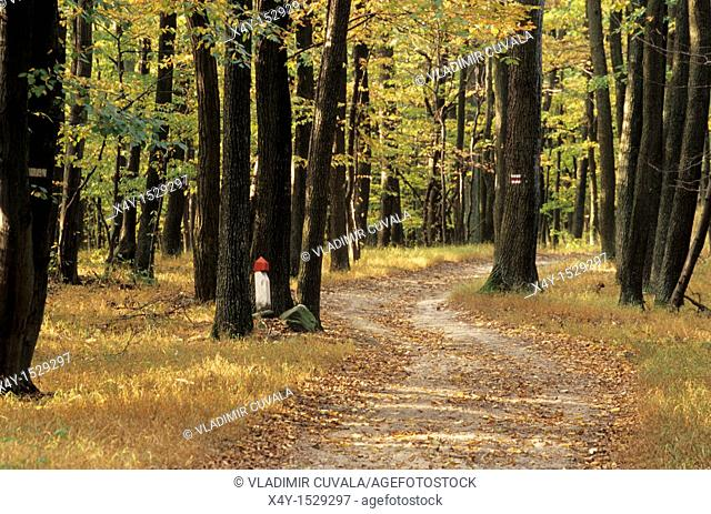 Red marked walking path in the woods of Male Karpaty, Slovakia