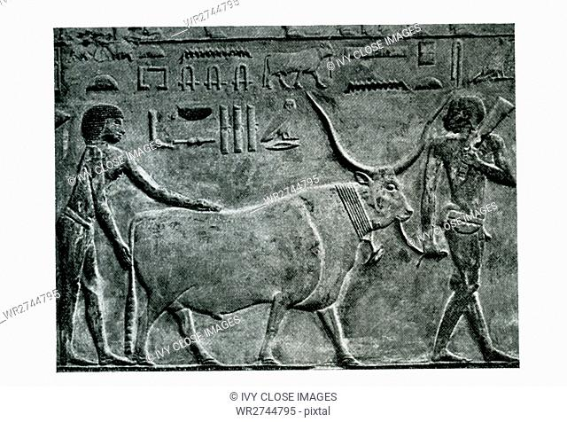 This carved relief shows a farmer bringing in a steer. It is from the Old Kingdom tomb of Princess Idut at Saqqara. Saqqara served as a huge burial ground in...