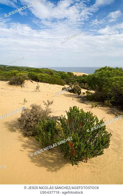 Doñana National Park. Huelva province. Andalucia, Spain